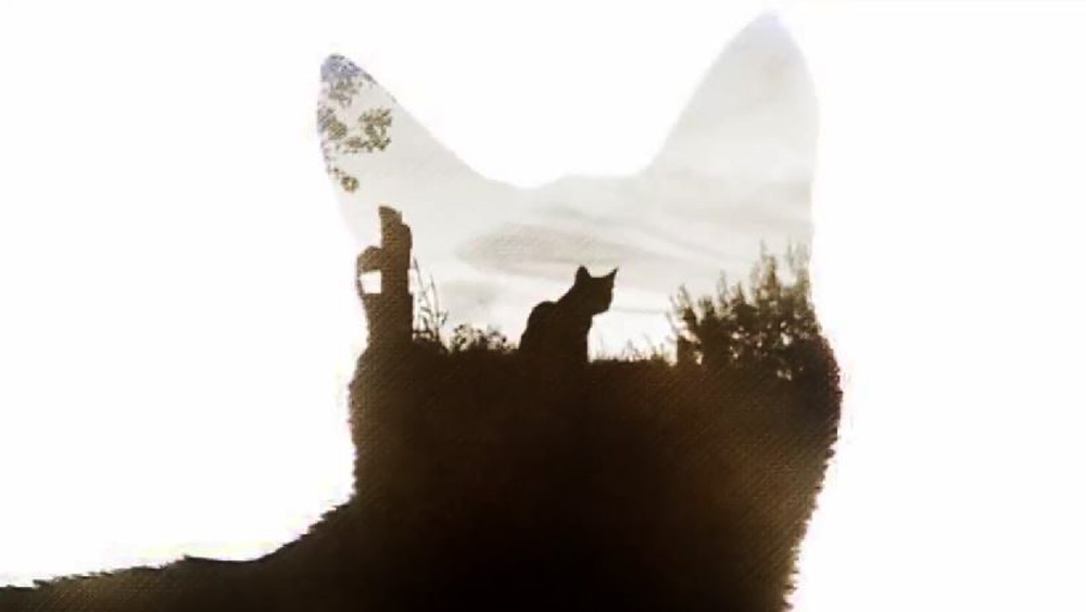 Clip des Tages: True Warrior Cats (True Detective Opening with Cats)