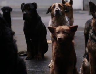 Kinostarts der Woche: Underdog, Hitman und Straight Outta Compton