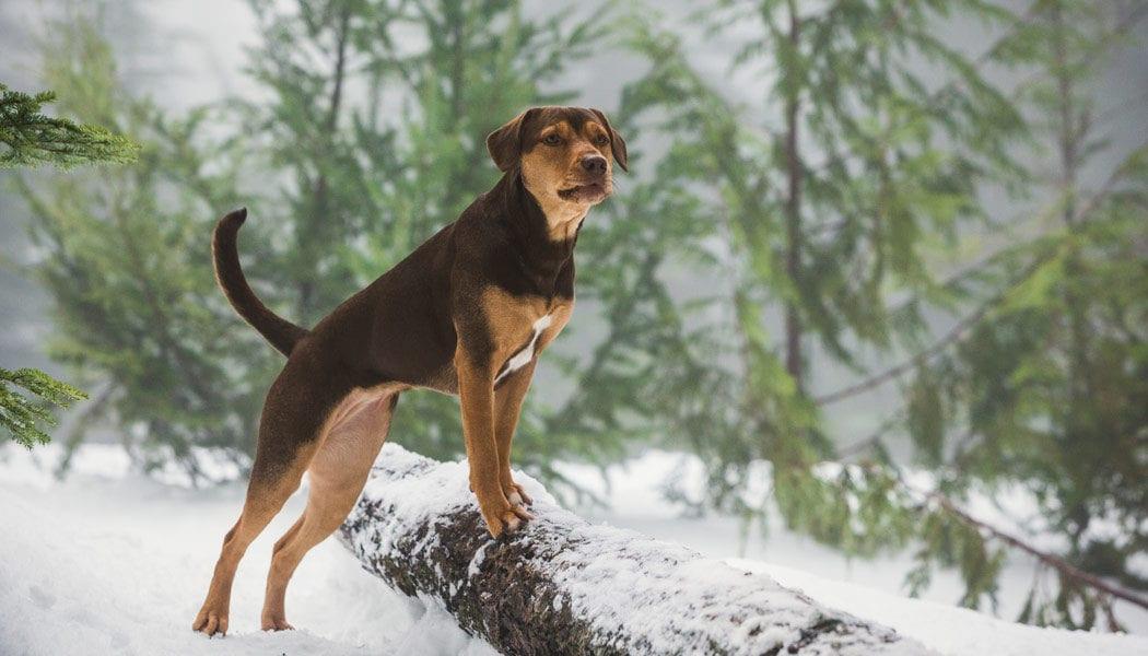 Die-unglaublichen-Abenteuer-von-Bella-(c)-2018-Sony-Pictures-Entertainment-Deutschland-GmbH(3)