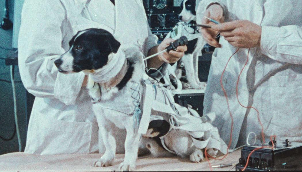 Space Dogs (c) 2019 Raumzeitfilm(10)