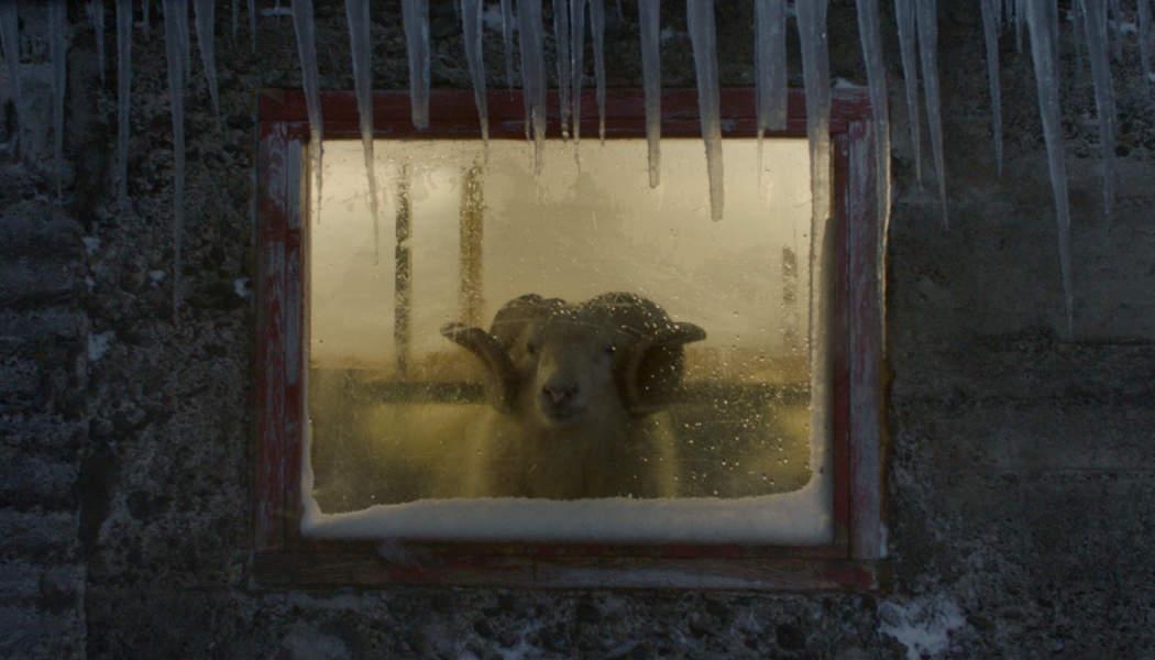 Lamb (Valdimar Jóhannsson) (c) 2021 Valdimar Jóhannsson(1)